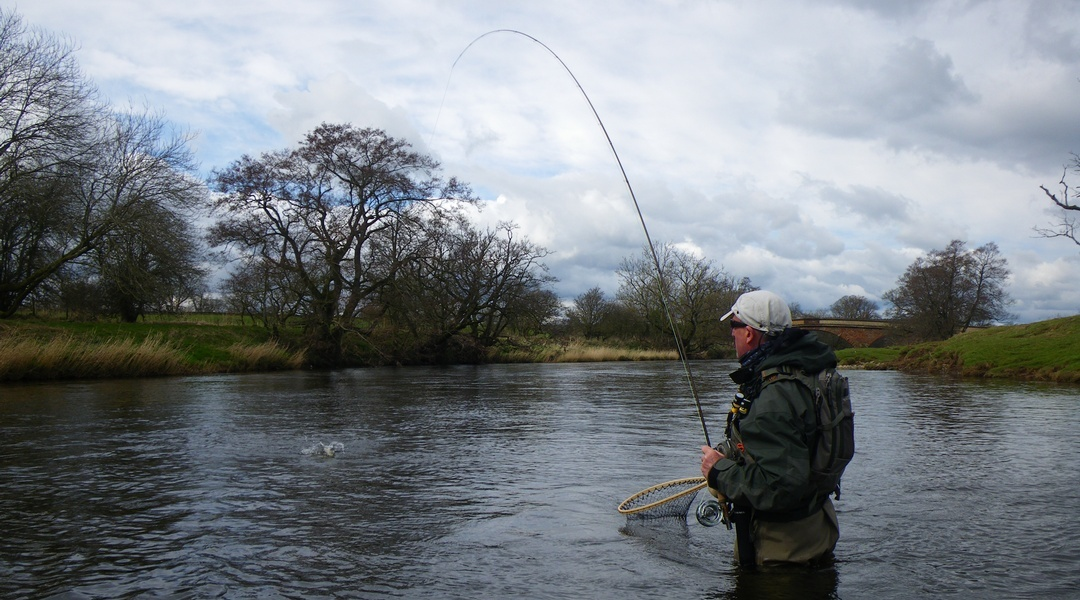 Grayling fishing in Eden