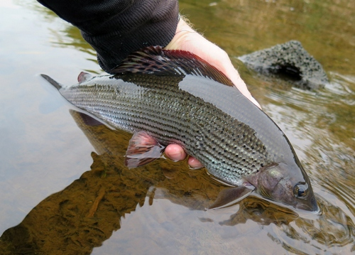 Grayling fishing in October