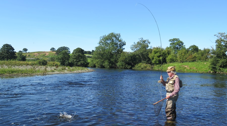 Fly fishing River Eden in Cumbria UK