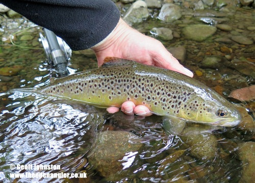 A small stream trout to 'The Klink'
