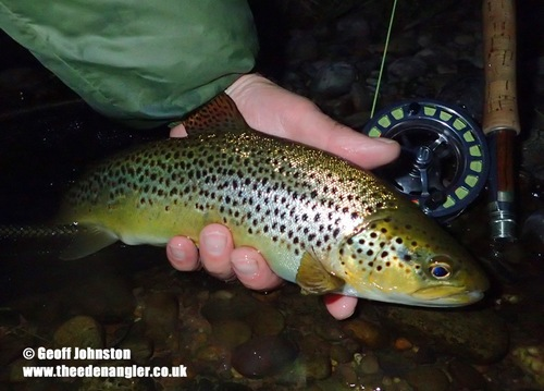 June hatches of Blue Winged Olives and caddis produced evening sport