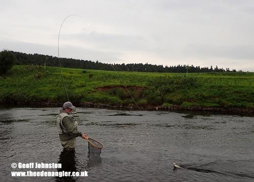 David draws a fish to the net