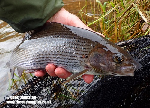 Grayling in October